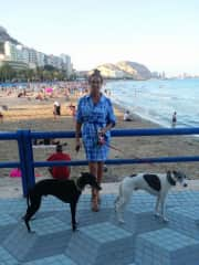Whippets Archie and Alfie of Alicante Spain