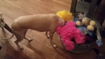 Violet choosing a toy
