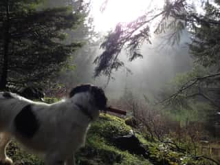 Playing fetch with Sito on Salt Spring Island in British Columbia, Canada.