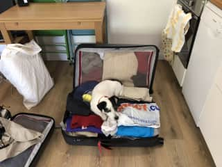 Barney did not want us to leave him in England!