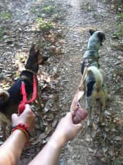 our weekly shelter dog walks