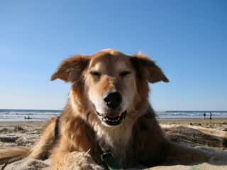 Browner. The. Best. Dog. Ever.