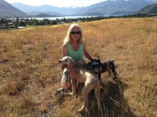 Looking after three friendly dogs in Wanaka, NZ