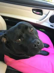 Saffi in the car