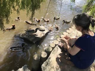 Feeding ducks and turtles at Duke Gardens