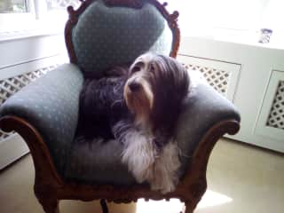 Elwood ( now sadly no longer with us ) chilling out in his favourite chair