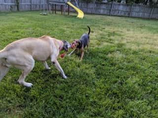 Chloe and Lily playing in their backyard while mom was away