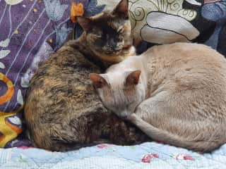 Anya and Lily (L-R)
