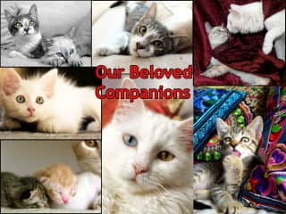 Our Beloved Companions!!!