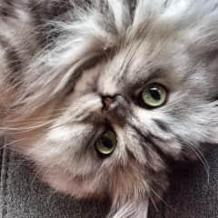 Gigi's big beautiful eyes