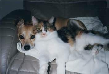 Sugar cat is snuggling with Sparky, awww