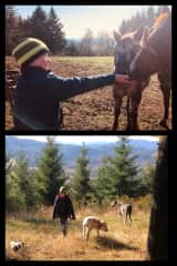 Staying at a 20 acre hobby farm with horses, chickens, a garden and 3 dogs, Eva, George and Kyra