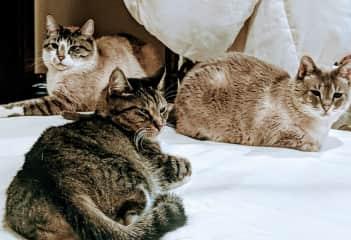My 3 stray babies ❤️