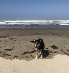 Tasha enjoying the Oregon Coast