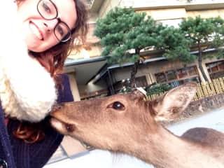 Dear deer friend in Japan during my travels