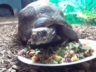 Fresh salad for Rosie - Grimsby Beach sit