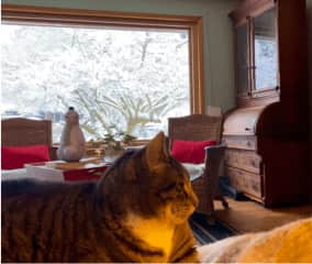 A view of our home with Tiger on Anne's lap.