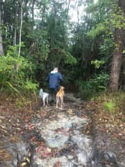 Ken with Lola & Gypsy in FNQ rainforest