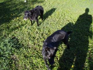 Milo and Otis, my constant Maui 'Poi' Dog companions