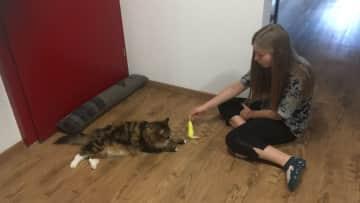 Emma help taking care of Swiss Kitty, Arthur.
