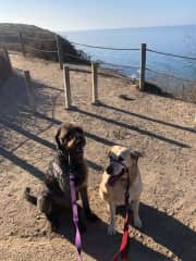 Two dogs on a hike about 10 min drive away from house