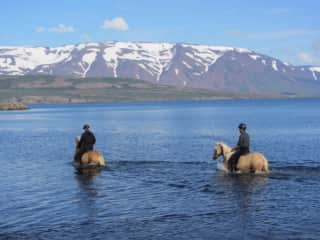 With horses in Iceland in water! GREAT!