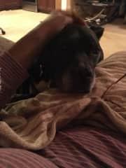 My dog Suzie.