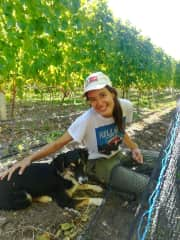 Working in a vineyard with the best company! (Chubut, Argentina)