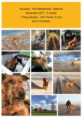 Housesit 1 Dog and 5 Chickens - Bakkum - The Netherlands - 2017