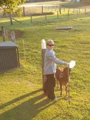 Catherine with Mandy and Brad's bottle fed calf