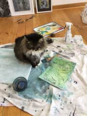 Mystic ,the Maine Coon kitty, inspecting artwork in Reenie's studio.