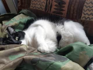 Our cat, Chaplin.