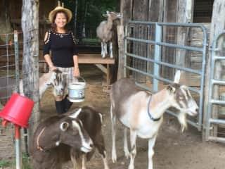 Pet care on a Farm-Lynchburg, VA