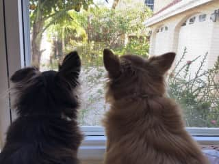 Best Friends keeping watch - Coco and Poppy