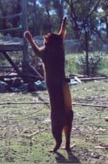 Jessie doing a sun dance