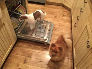 Pepe & Al doing their chores