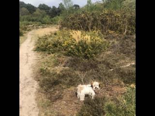 Oxshott Heath .. great for walks