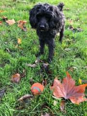 Truffle loves the ball