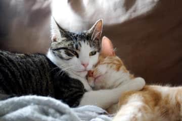 Scarlett and Ashley - my kittens in NZ