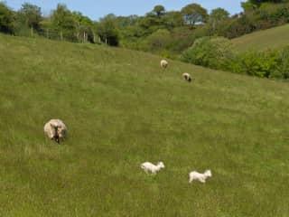 Farm next door