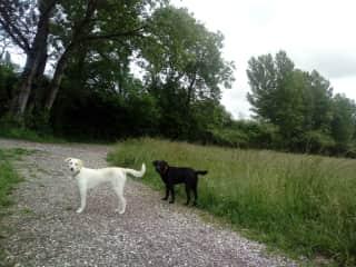 On a regular walk around the fields.