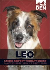 Leo is a member of CATS (Canine Airport Therapy Squad) at Denver International Airport.