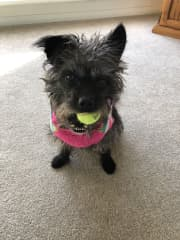 Luna aged 4 wants to play ball.