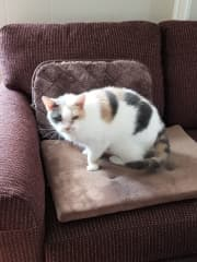 This is our current cat, Sarah that is 19 and a half years old.