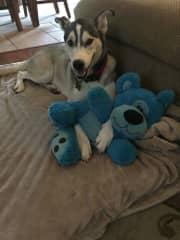 My dog Ryker and his bear