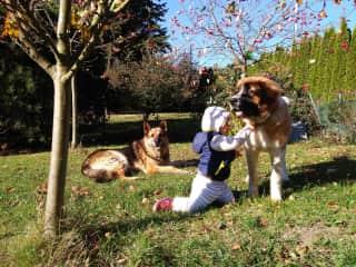 Bora (German Shepherd, † 2021) and Ciri (Moscow watchdog)were best friends. Ciri is 4 years old by now.