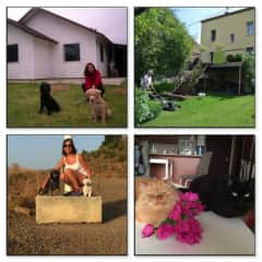 House and pet sitters in Puerto Montt (Chile), Trier (Germany) and Malaga (Spain), Ras al Khaimah (Emirat).
