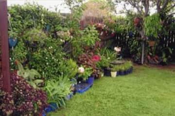 Part of my back garden