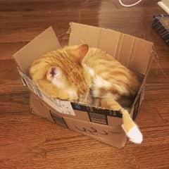 Omar loves boxes!