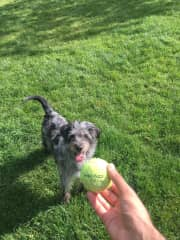 Playing fetch with Gatsby 'The Great'! (Prague, Czech Republic)